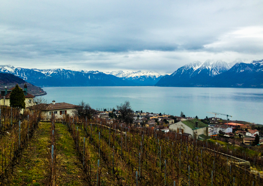 Lausanne Switzerland Winery